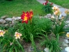 My daylily bed - upper part