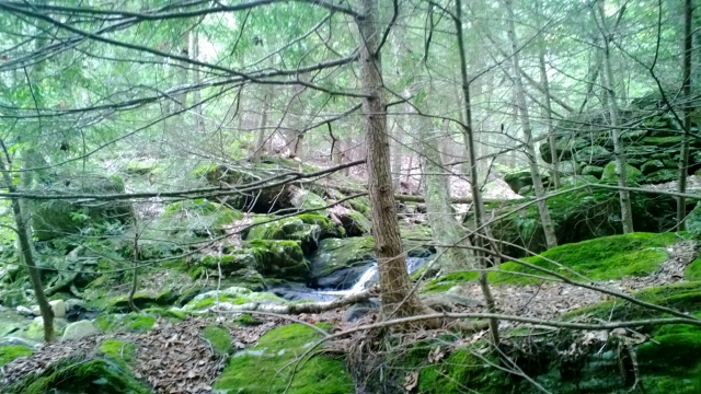 preserve the forests The importance and conservation of such as the forest and aquatic we can all gain a better understanding of how to preserve the earth's natural biomes.